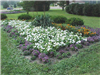 Full flower bed in Riverview Park